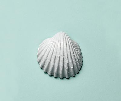 Painting the seashells